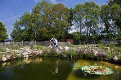Raising fish in farm pond.