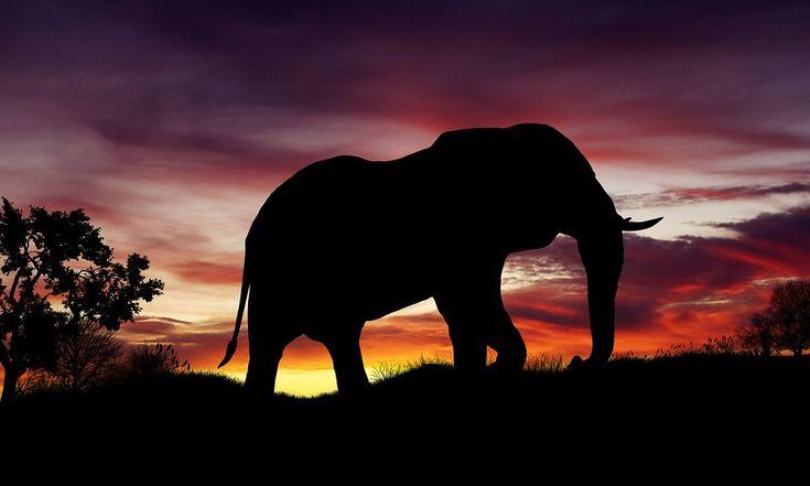 Bildresultat för elefanter solnedgång