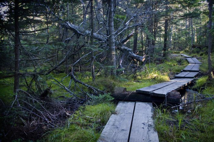 5. Mt. Greylock offers all sorts of hiking options, from deep woodland rambles, to sky-high summit scrambles. Pick a direction and just start walking � you won't be disappointed.