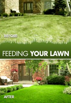 Feed your lawn the nutrients it needs.