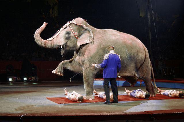 Irán prohíbe el uso de animales en circos