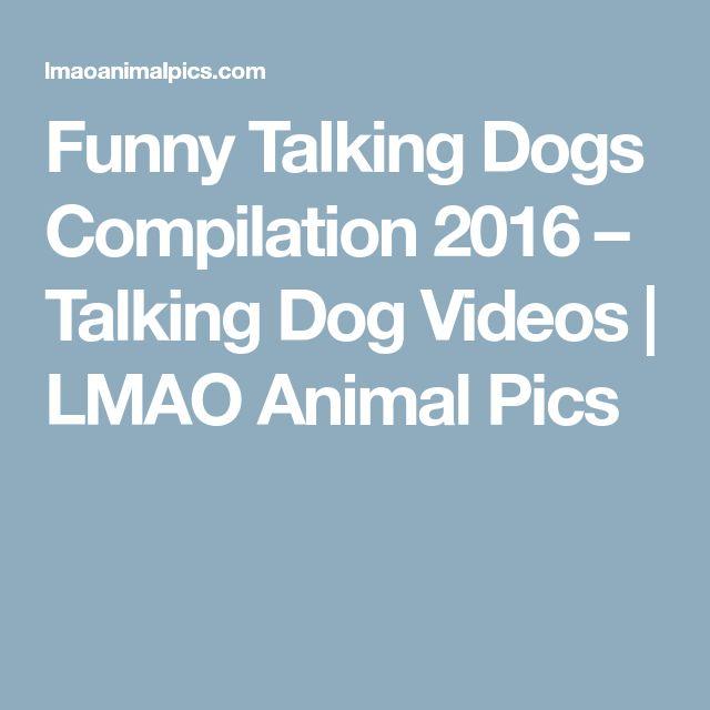 Funny Talking Dogs Compilation 2016 – Talking Dog Videos | LMAO Animal Pics