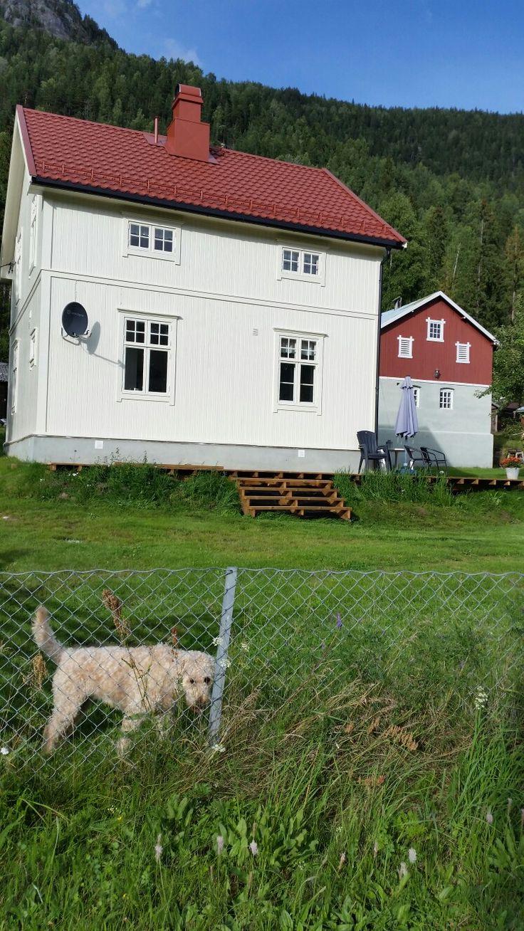 Skogmo Flå I Hallingdal