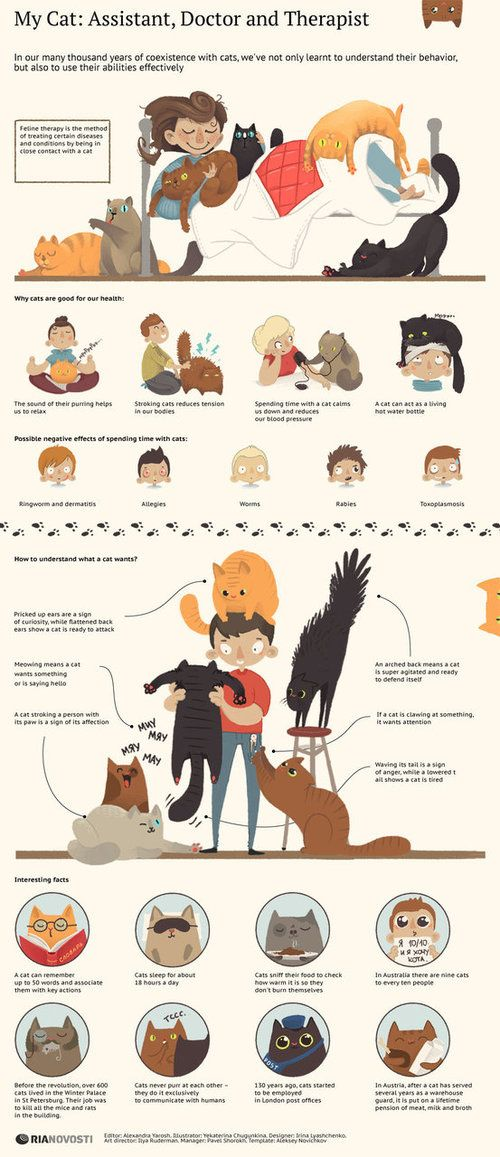 Cat Infographic: Cats Are Assistants, Doctors And Therapists cat infographic: