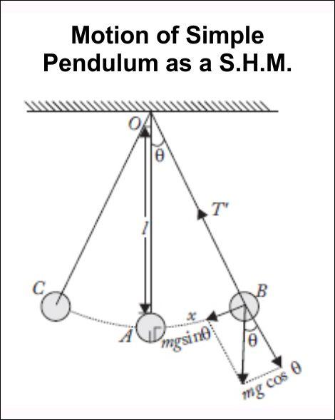 Motion of Simple Pendulum as a S.H.M - see Pendulum Lab Simulation - https://www.teacherspayteachers.com/Product/Physics-Pendulum-Lab-2428643