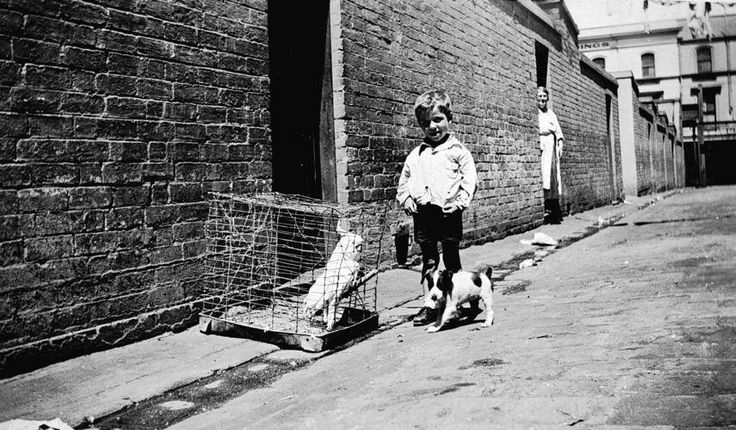 West Melbourne - 1935. A small boy with a cockatoo and a dog. We know that the woman is June Bailey, the cockatoo was called George Brown and the dog was called Nicky, but we don't know the name of the little boy. Cute photo, it would be interesting to know the exact location in West Melbourne. Museums Victoria http://collections.museumvictoria.com.au/items/769601