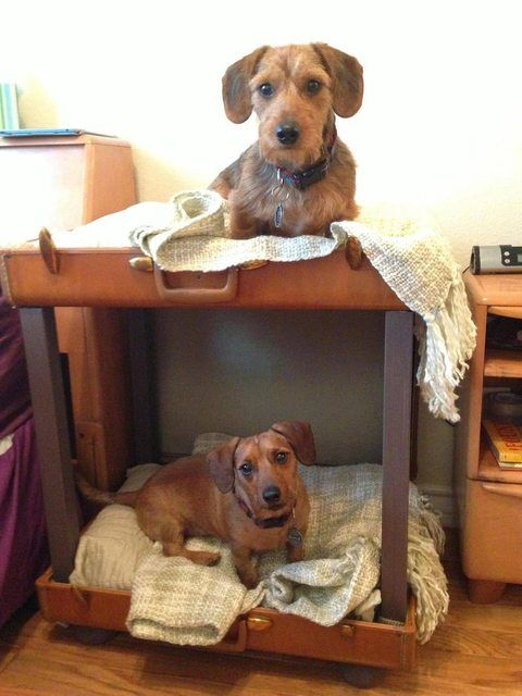 Dog bunk beds made of old luggage #diy #upcycle #pets #dogs #furniture #sleep #travel bag #suitcase