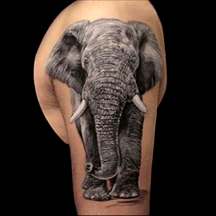 Realistic elephant tattoo done in black and grey by Brandon Marques. Timeless Tattoo Studio, Toronto, ON. For appointments and info visit our website or email: info@timelesstattoos.ca.