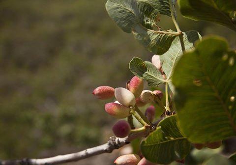 Siamo orgogliosi della qualità dei nostri prodotti Veri pistacchi bronte 100% sicilia