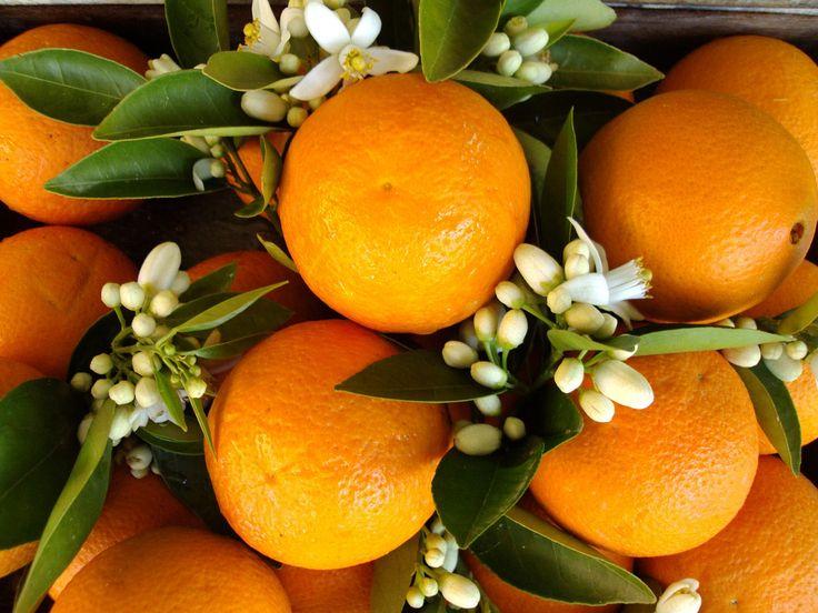Portakal kabuklarının lezzet şölenine dönüştüğü NEFİS ve PRATİK portakal kabuğu reçeli tarifi hemen denemelisiniz...bu tada hayran olacaksınız..