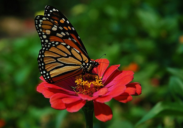 Butterfly flying away - photo#50