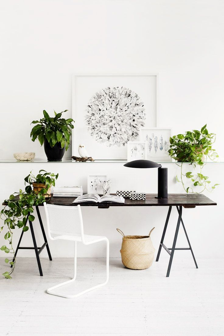 Could These Stunning Plants Be The Next Fiddle Leaf Fig?