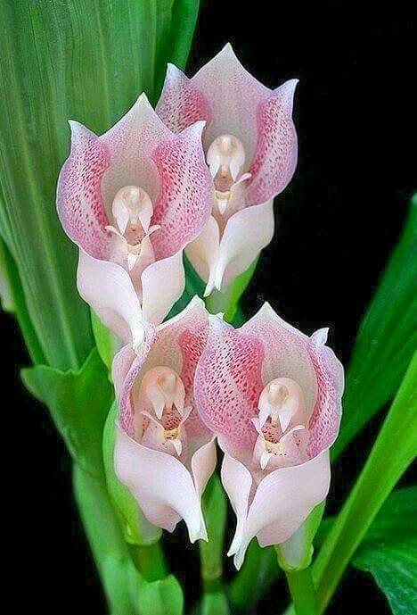 Twisted orchids babies