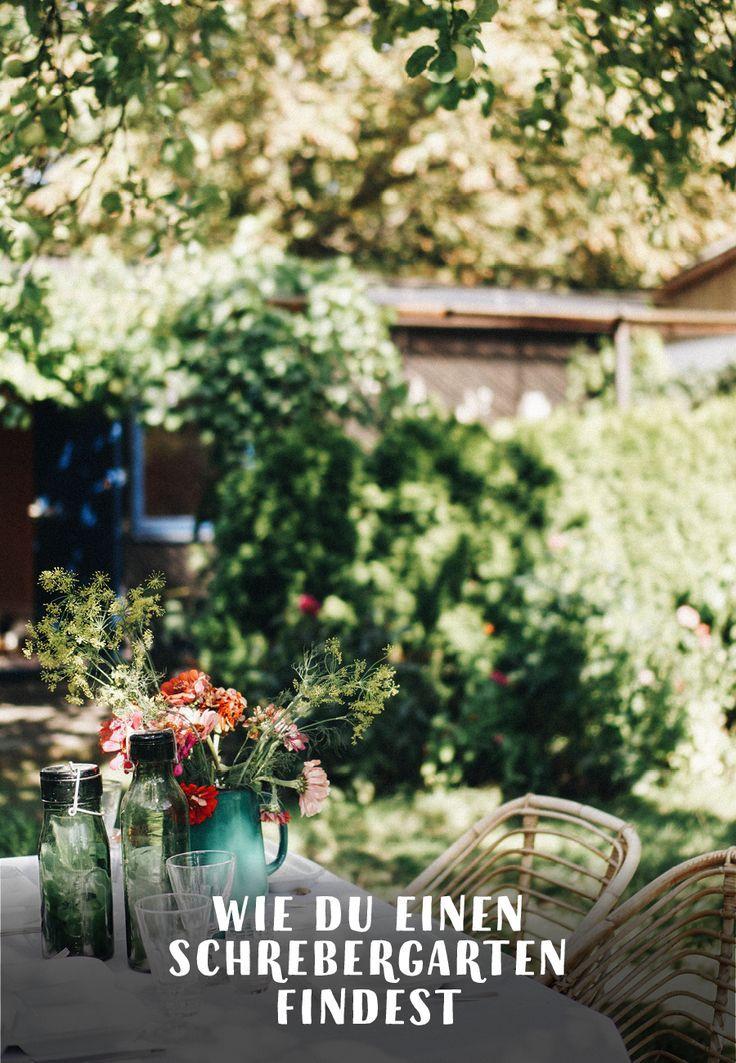 Schrebergarten Gartenblog Hauptstadtgarten Schrebergarten Garten Pflanzen