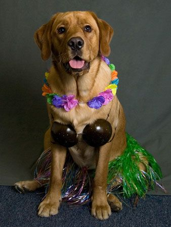 5 halloween costumes for dogs and other pets halloween dog - Halloween Costumes For Labradors