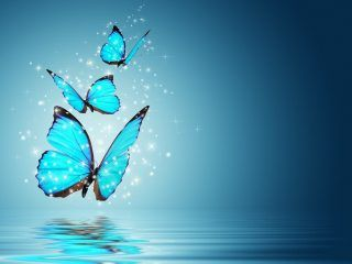The ever new collection of butterfly designs high resolution wallpaper