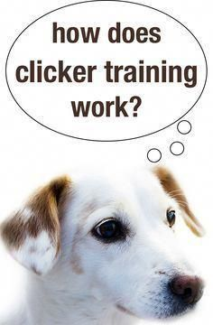 How Does Clicker Training Work Easy Dog Training Tips Dog