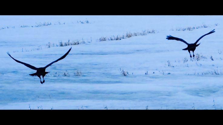 Ribs & Ravens Along The Dawson Trail in Manitoba