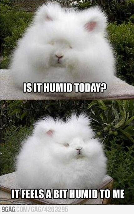 hahaha: Humidity Today, Curly Hair Problems, Hair Doe, My Life,  Angora Rabbit, Funny Stuff, I Cans Relate, Hair Looks, Curlyhair