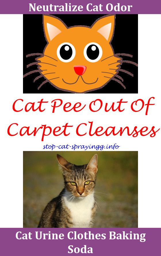 Cat Urine Natural Why Does My Keep Spraying In The House Spray Water Stop