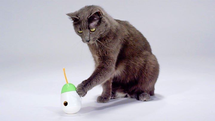 Is Your Cat Meowing For Attention At Night During The Day Make Sure You Are Wearing Your Cat Out Cat Meowing At Night Best Interactive Cat Toys Kitten Lover
