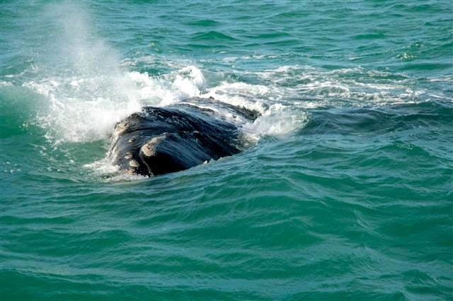Whale watching season is upon us in South Africa