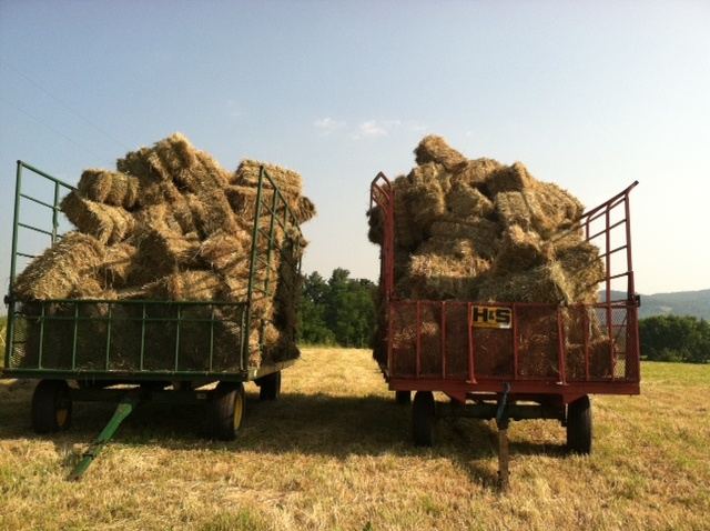 The first cutting of hay, late June