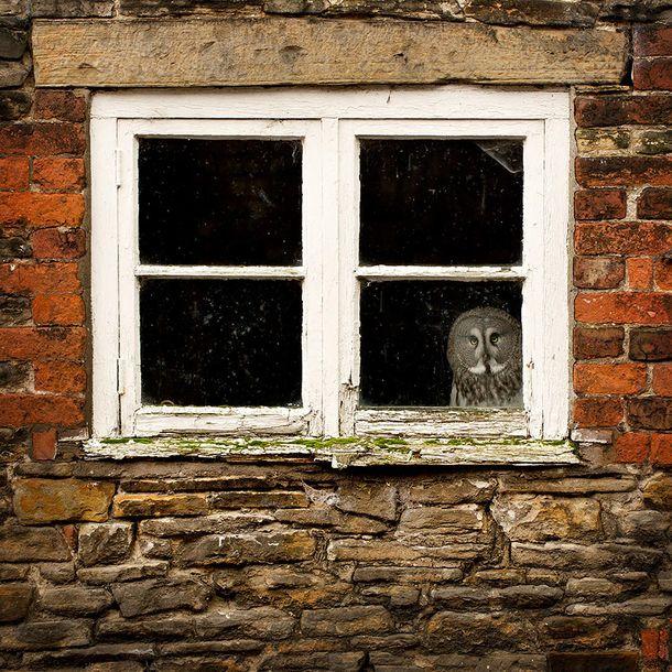 Zwierzaki w oknie