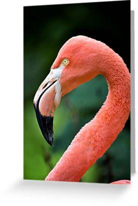 Flamingo greetings card