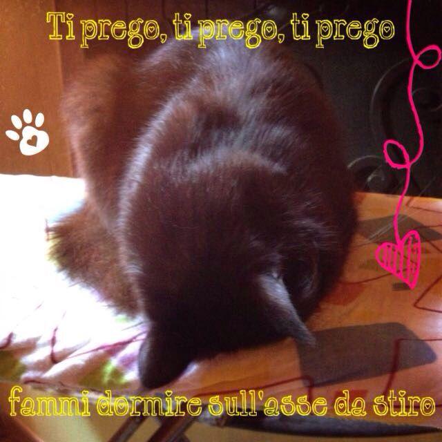 Black prega #cat