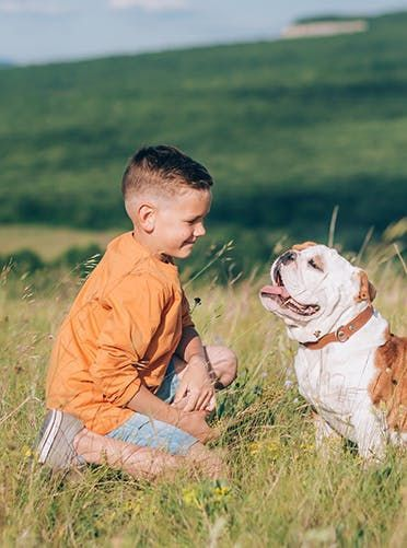The Very Best Kid-Friendly Dog Breeds for Your Growing Family: Bulldog Affectionate, social and generally super-duper chill, these stocky four-legged friends are also great at getting along with other pets. #affectionatecatsbreeds