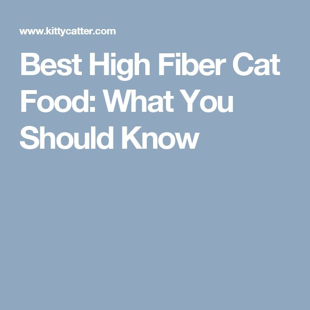 Best High Fiber Cat Food: What You Should Know