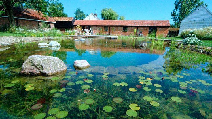 Piscine naturelle biologique jardi brico piscine for Brico piscine