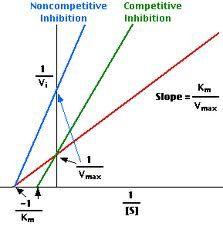 enzyme kinetics - Google-søgning