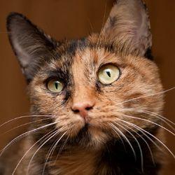 Котята и кошки в добрые руки, бесплатно. Котята в дар Москва. Отдам / Возьму котенка