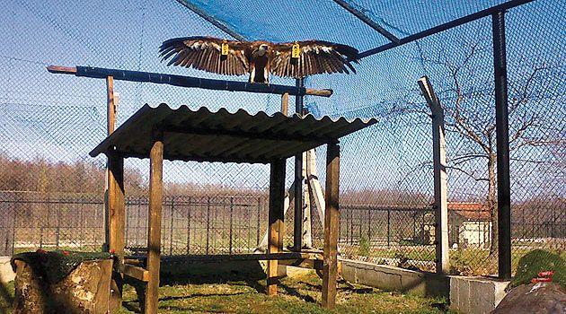 Celal Acar Yaban Hayvanları Kurtarma ve Rehabilitasyon Merkezi - Bursa.com.tr Tesis bünyesinde aslan-kaplan, su kuşları, kurt-tilki, yırtıcı kuşlar, sürüngenler, geyik-karaca ve maymunlar için tedavi ve rehabilitasyon bölümleri bulunmaktadır.  Yaban Hayvanı Kurtarma ve Rehabilitasyon Merkezi'ne 2010 yılı ocak ayından itibaren yaban hayvanı kabulü yapılabilmektedir.