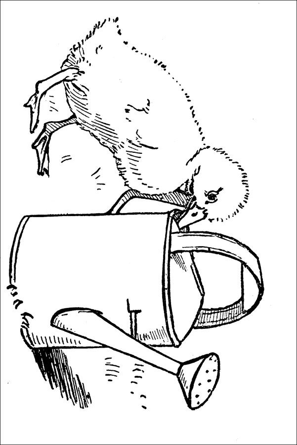 Duck Coloring Pages Image 3 Adult and Children's