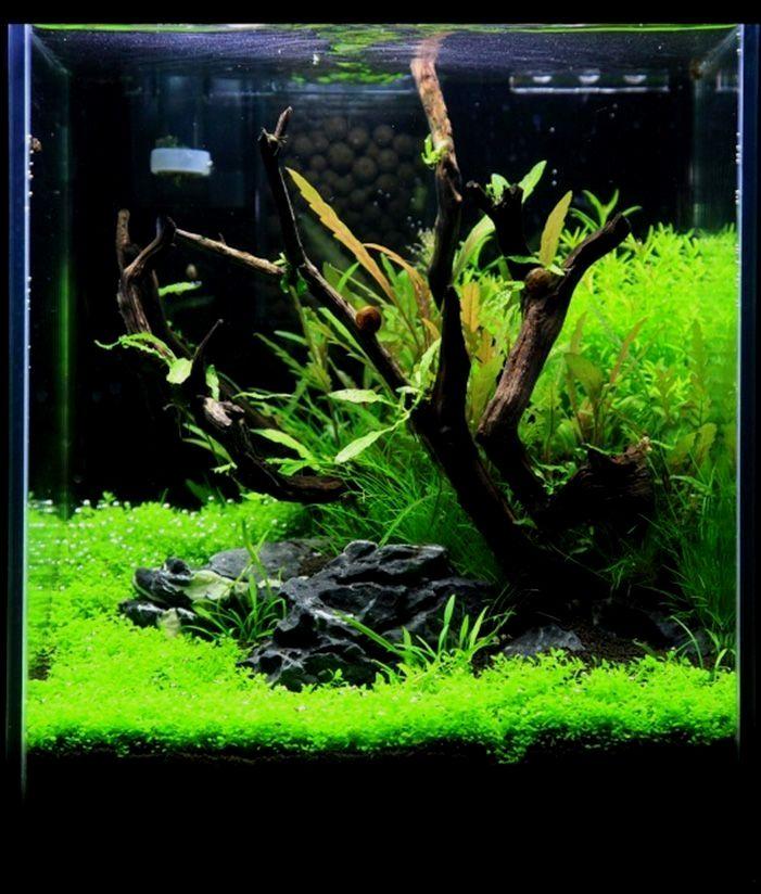 Tolles Bepflanztes Aquarium Mit Treibholz Und Stein Kaufen Sie