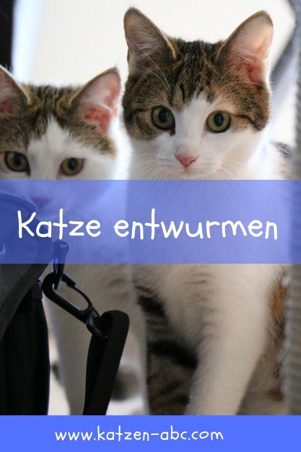 Das Sollte Man Zum Thema Katze Entwurmen Wissen Katzen Katzen