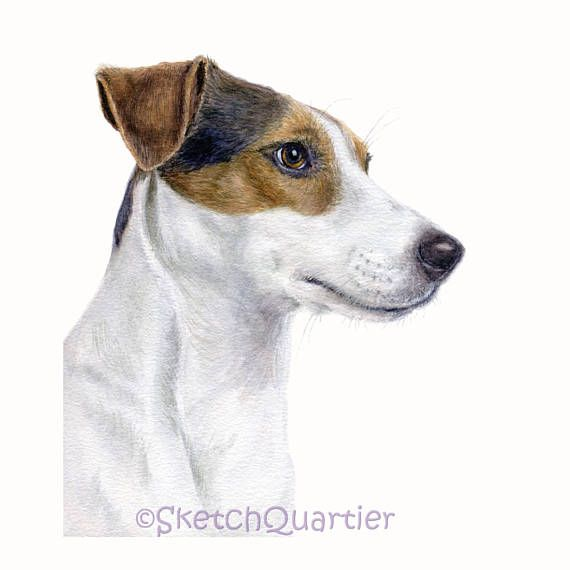 Hand painted watercolour Jack Russell Terrier/ Digital clipart