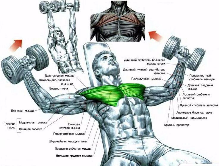 1000+ images about Exercise Chest on Pinterest | Chest ...