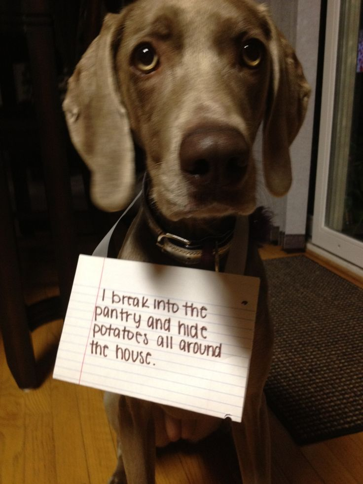 Dog Shame- bucket list- have to do this to one of my