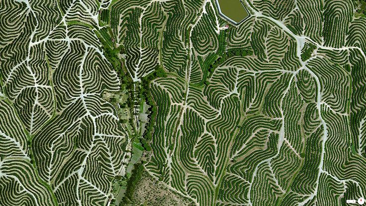37°42′12″N 6°36′10″W. Vineyards swirl on the hills of Huelva, Spain. The climate there is ideal for grape growing with an average temperature of 64 degrees and a relative humidity between 60% and 80%.