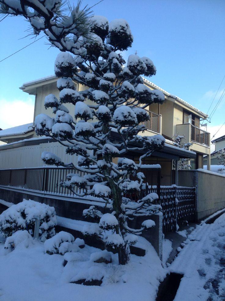 Nagoya snows