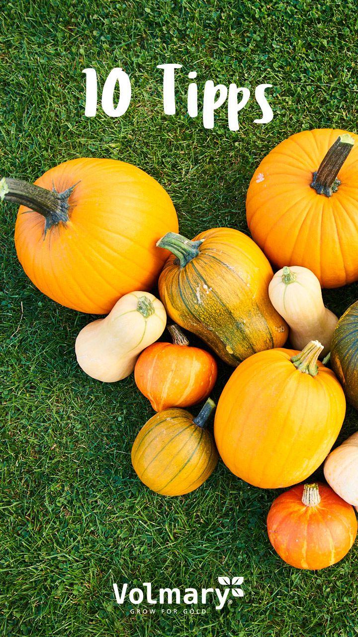 Gartenarbeit Im Oktober Die Wichtigsten Tipps Plant Happy Kurbis Pflanzen Garten Gartenarbeit