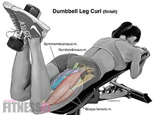 Lying Dumbbell Leg Curls help to separate your upper rear thigh from your butt and help shape the entire rear view.