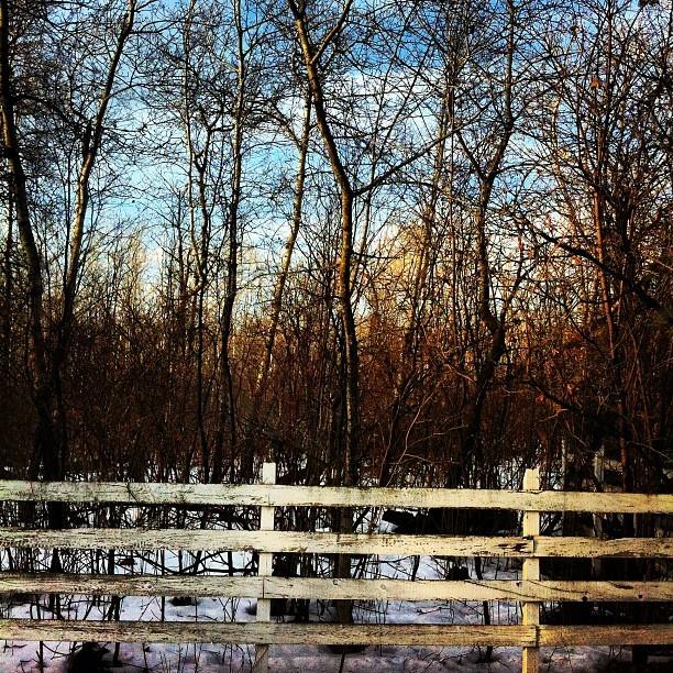 - @nediard | Webstagram  Fence!