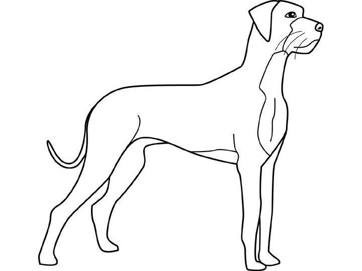40 best dog images on pinterest