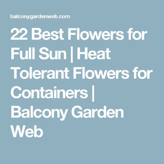 25 best ideas about full sun garden on pinterest lantana flower full sun flowers and full - Heat tolerant plants keeping gardens alive ...