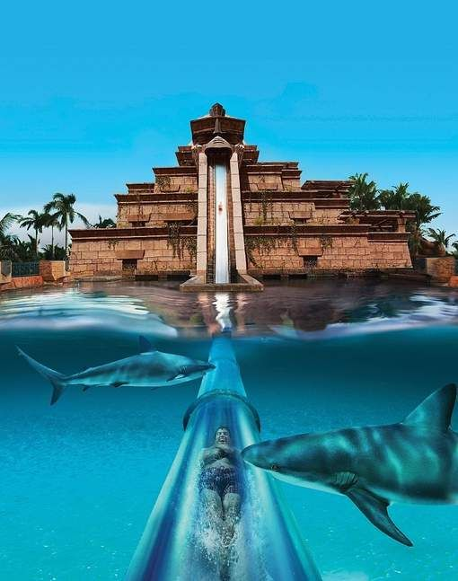 Baby girl climb to the top of the Leap of faith and said, Um, no thank you!! Atlantis Bahamas Paradise Island Aquaventure Water Park @Sydney Martin Martin Martin Martin Martin McCulley